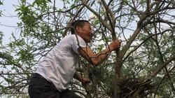 """Bị cho là """"khùng"""" khi bỏ tiền trồng cây như rừng dụ cò về làm tổ"""