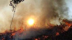 Quảng Trị: Đốt thực bì trồng rừng, y sĩ bệnh viện ngạt khí tử vong
