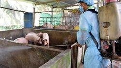 Thêm Bạc Liêu có dịch tả lợn châu Phi, dịch bao trùm toàn ĐBSCL