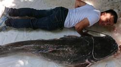 """Cá """"khủng"""" to ngang người lớn dính câu cần thủ ở Đắk Lắk"""