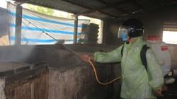 Quảng Trị: 2 ngày tiêu huỷ 217 con lợn bị dịch tả lợn Châu Phi