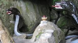 """Ly kỳ Nam Bộ: Cuộc """"đụng độ"""" không cân sức với cả ổ rắn khổng lồ"""