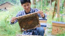 """Không tìm được việc, chàng trai về quê nuôi ong kiếm vài trăm triệu """"ngon ơ"""""""