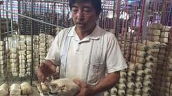 Vùng đất dân rủ nhau trồng nấm bào ngư, mỗi lứa nấm lời 30-40 triệu
