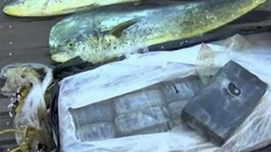 Thấy cá nhảy liên tục, mò lại xem, phát hiện điều đáng sợ dưới mặt nước