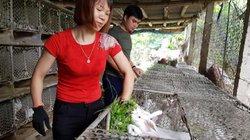 """Nam Định: Gái xinh nuôi 700 """"cục bông"""" di động, kiếm chục triệu/tháng"""