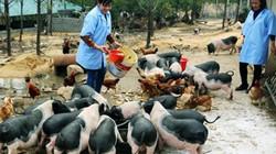 Đa dạng cách vận động tăng trưởng  Quỹ Hỗ trợ nông dân