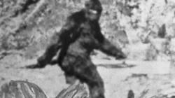 Cuộc điều tra suốt 2 năm của FBI về quái vật huyền thoại Chân to