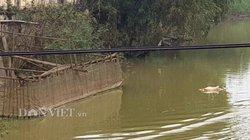 Công ty nước Nghệ An lén lút hút nước từ sông Đào ô nhiễm?
