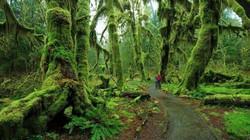 Lạc vào mộng cảnh bởi những khu rừng khó tin nhưng có thật