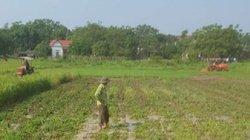 Phú Thọ: Thực hư việc xã thuê máy, bừa nát ruộng lúa sắp thu hoạch?