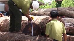 Vợ chồng sếp kiểm lâm nhận gỗ của Phượng 'râu' không bị xử lý hình sự