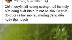 Vụ bừa nát lúa sắp thu hoạch: Công an mời người tung clip làm việc