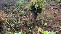 Nghệ An: Khởi tố thêm 5 bị can thuộc BQL rừng phòng hộ Yên Thành