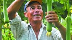 """Lão nông bán 20 nghìn một quả """"dài thuột"""" này, một năm kiếm 300 triệu"""