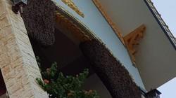 Khó tin Điện Biên: Ngôi nhà 8 năm liền ong mật lũ lượt kéo về làm tổ