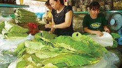 Hồi sinh lá loon-loài cây kỳ lạ thay túi ni lông ở rừng Bình Thuận