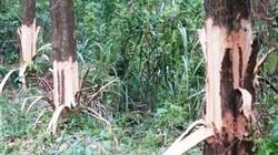 TT-Huế: Bí thư xã giải trình việc bị tố phá hoại rừng của dân