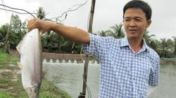 Làm giàu ở nông thôn: Đổi đời nhờ nuôi loài cá bông lau