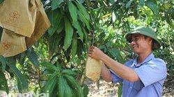 Giám đốc chân đất phủ xanh đồi hoang bằng trái cây đặc sản
