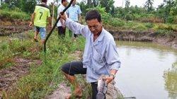 Cà Mau: Nơi cả làng giàu có nhờ nuôi 2 loài cá đặc sản cực ngon