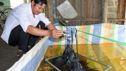 Có 10m2 bể, nuôi được cả tấn lươn không bùn, thu hàng trăm triệu
