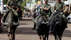 Chuyện lạ thú vị: Quân cảnh Brazil cưỡi trâu để tuần tra