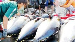 """Nói không với khai thác hải sản trái phép hoặc nhận """"thẻ đỏ"""" của EC"""