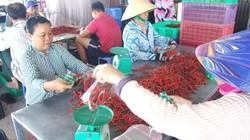 """TP.HCM: Ngại chia sẻ """"bí quyết"""", nông dân ít tham gia HTX"""