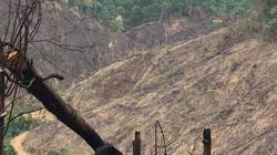 """Thái Nguyên: 11ha rừng bị """"phát trắng"""", địa phương không hay biết?!"""