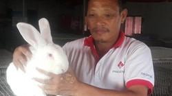 Thái Bình: Trên nuôi thỏ, dưới nuôi giun, lãi 20 triệu mỗi tháng