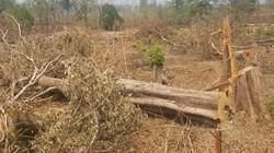 Tịch thu hơn 400m3 gỗ, nhiều lãnh đạo, cán bộ bị kỷ luật