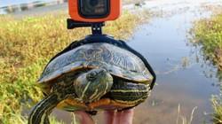 Khám phá thiên nhiên qua góc nhìn trên lưng một con rùa