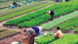Tiếp cận chuỗi giá trị cho sản phẩm nông nghiệp Việt Nam