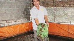 Tận dụng chuồng lợn nuôi lươn không bùn, có con nào lái mua con đó