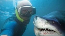 Hành động quen thuộc gây chết người nhiều gấp 5 lần so với bị cá mập tấn công