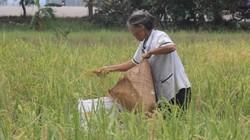 Người già ở Việt Nam chưa được chăm sóc đúng mức