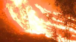 Xác định nguyên nhân hơn 80ha rừng ở TT-Huế bị thiêu rụi