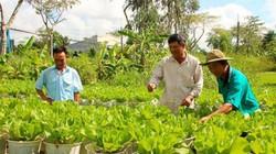 Nông dân Sóc Trăng học Bác, giúp nhau vượt khó, làm giàu