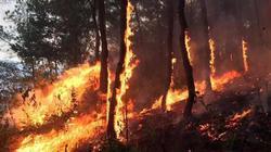 Nóng trong tuần: Chưa thể dập tắt vụ cháy rừng khủng khiếp đã 3 ngày ở Hà Tĩnh