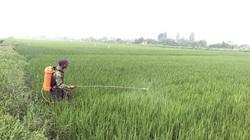 Bộ NNPTNT chỉ đạo giữ an toàn 1,1 triệu ha lúa Đông Xuân