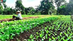 Đắk Lắk: Ngày càng nhiều mô hình khởi nghiệp từ nông nghiệp sạch