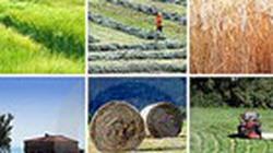 Thừa nông sản do quy hoạch không phù hợp