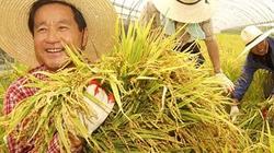 Hàn Quốc: Dân thành thị đổ xô về nông thôn