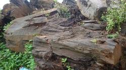 Đăk Lăk: Đề nghị tỉnh bán đấu giá 77m3 gỗ thủy tùng