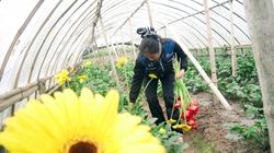 Xã điểm nông thôn mới Song Phượng: Cuối 2012 sẽ về đích