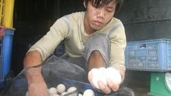ĐBSCL: Dân chăn nuôi long đong theo quả trứng