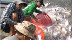 Bàn giải pháp hỗ trợ chăn nuôi, thủy sản