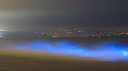 Thủy triều bỗng thành ánh sáng xanh trong đêm tối