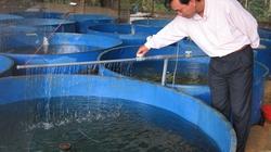 Lâm Đồng: Cơ hội lớn phát triển nuôi cá nước lạnh